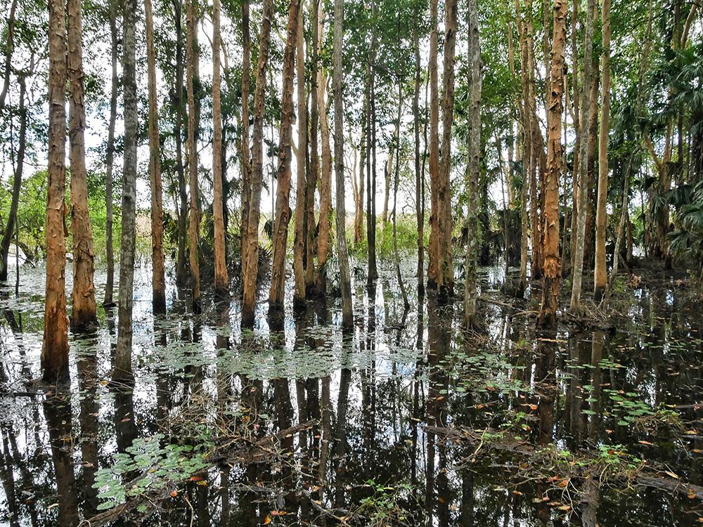 Door de vele regen die gevallen is, staat het water hoog