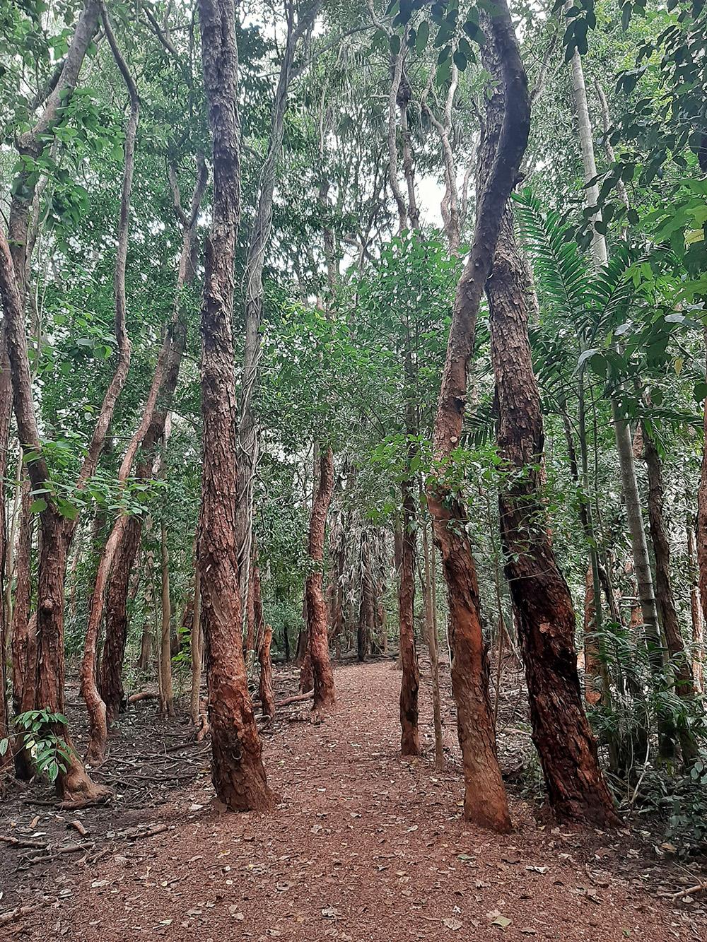Het eerste stuk van de Fogg Dam Lily Boardwalk loop je door een bos - Woodlands to Water Lilies Walk
