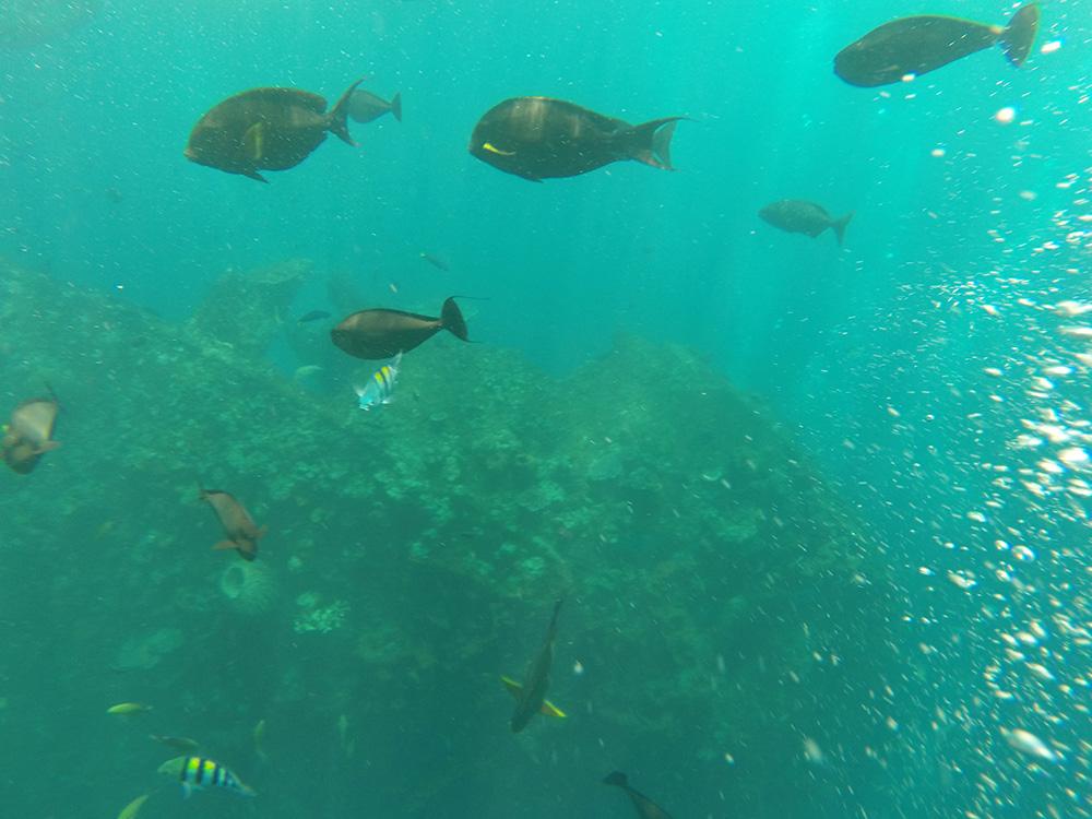 Snorkelen bij Tulamben Shipwreck