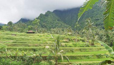Reisvideo over Bali Indonesië