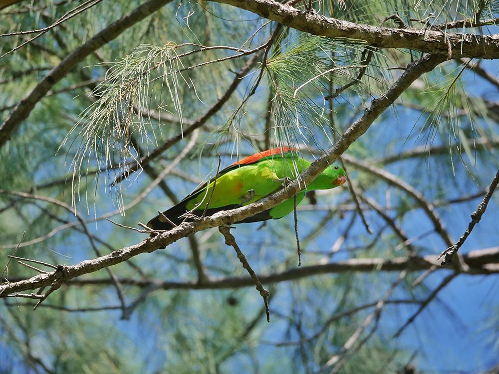 Gekleurde vogels in het zonnetje