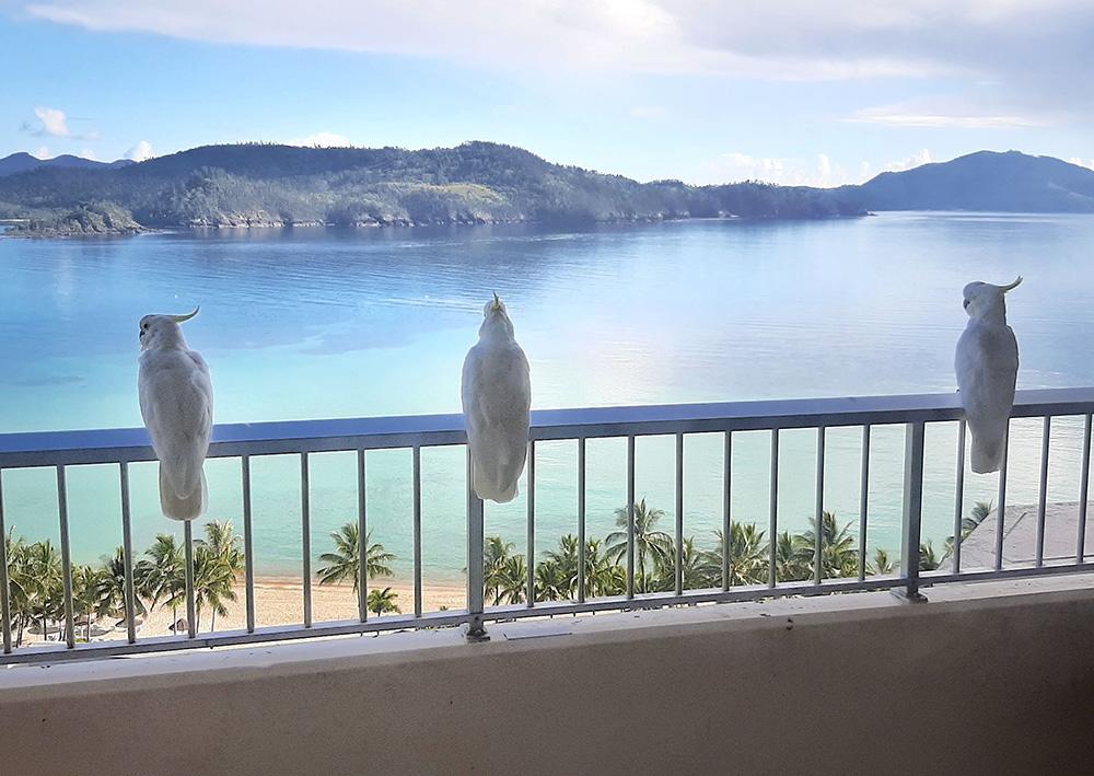 Kaketoe conversatie op ons balkon