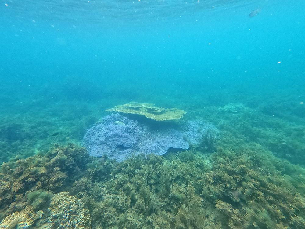 Gekleurd koraal