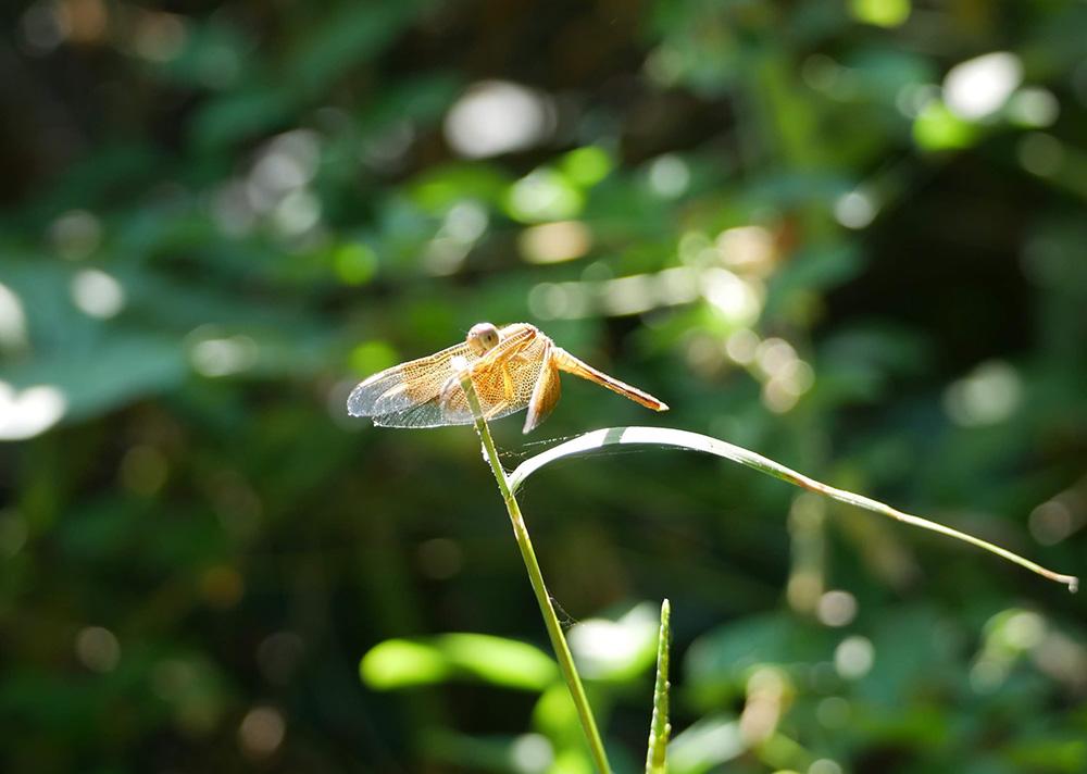 Honderden libellen vlogen langs ons