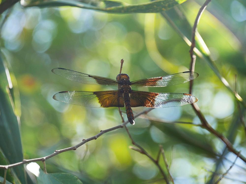 Prachtige beesten Libellen en helemaal van dichtbij