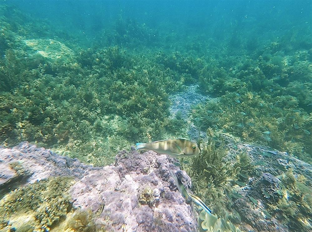 Heel veel mooie vissen gespot tijdens het snorkelen
