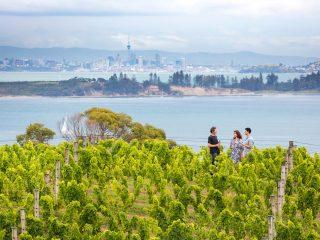 Auckland is de meest aangename stad ter wereld om in te wonen