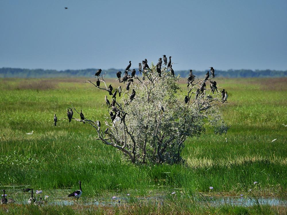 Grote verzameling watervogels in een boom