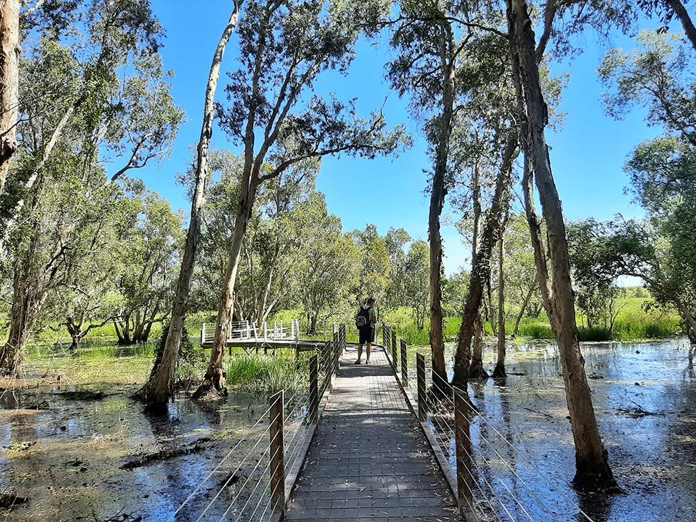 Loopbruggen over het water tussen de wetlands - Monsoon Forest Walk