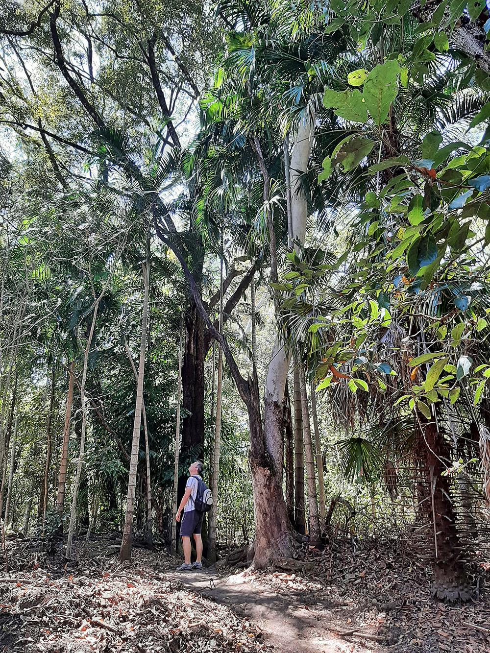 Avontuurlijke wandeling door de Australische natuur - Monsoon Forest Walk