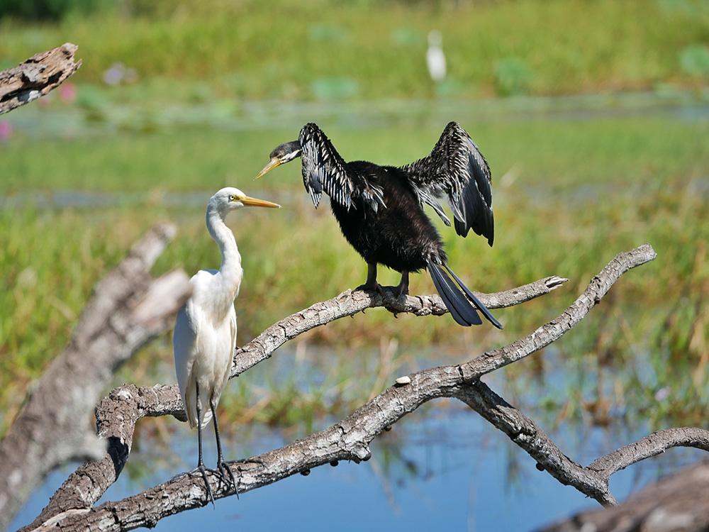 Grote watervogels hebben een onderonsje