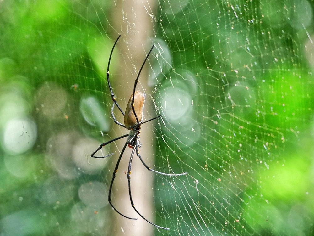 Grote spin hangt boven het looppad