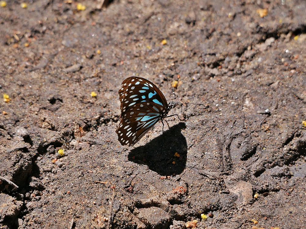 De Monsoon Forest Walk is een goede plek om vlinders te spotten
