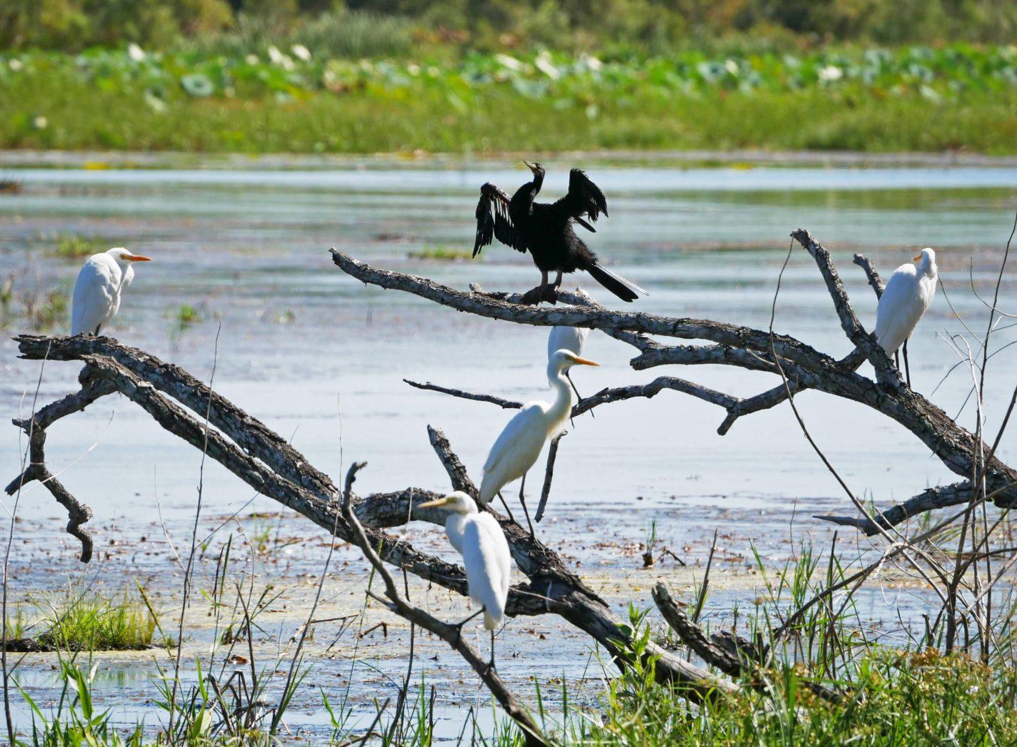 Vogels genieten van de dry season