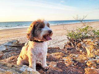 Vakantie met hond - zo vind je eenvoudig hondvriendelijke accommodaties!