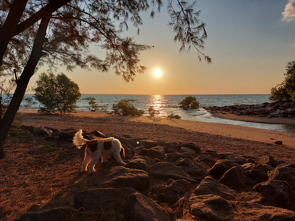 Huisdier mee verhuizen naar Australië