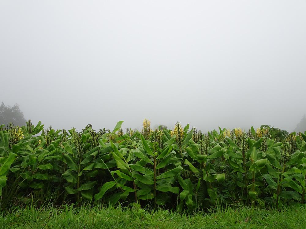 Bela vista op São Miguel met mist
